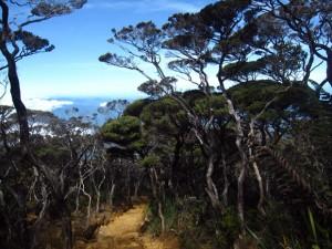 Mount Kinabalu tree fauna