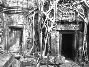 angkor wat temple with tree