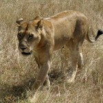 African Safari – 11 Tips To Save You Money