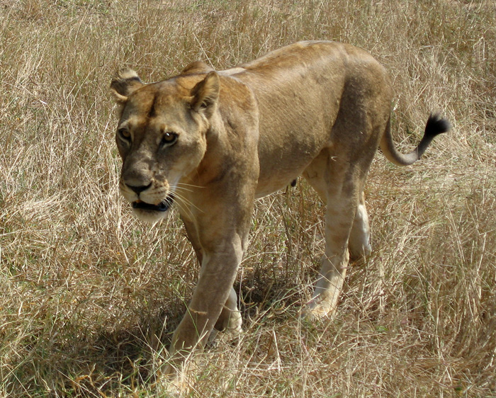 African Safari - 11 Tips To SAVE You Money