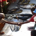 Dar Es Salaam Fish Market – Tanzania's Most Thrilling Auction!