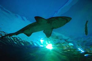 shark siam 101 Things to Do in Bangkok
