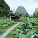 Taking a Break in the Middle of a Chinese Lotus Patch in Yangshuo
