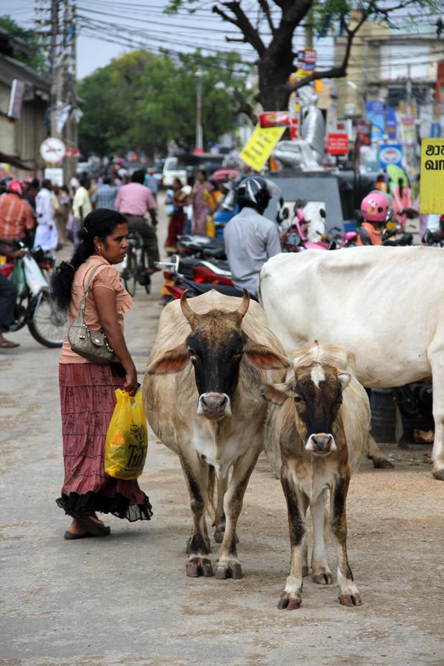 Jaffna City