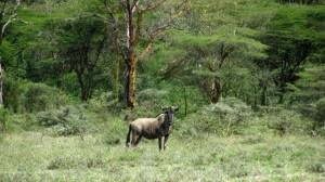 Nairobi Attractions