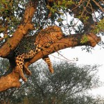 Exotic Wildlife at South Africa's Timbavati Nature Reserve