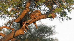 Timbavati Wildlife Reserve in South Africa