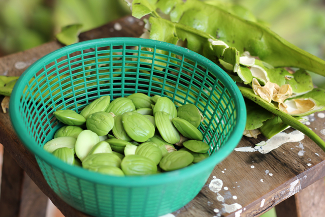 The Stink Bean - A Little Smelly, A Lot of Flavor