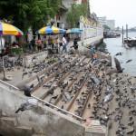 Photo: Pigeon Colony at Bangkok's Wat Rakang