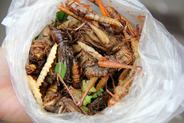eating bugs insects How to Eat Scary Insects, Worms, and Bugs in Thailand