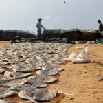 PHOTO: Drying Fish in Sri Lanka