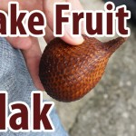 VIDEO: Salak – Snake Fruit!