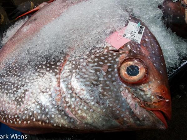 honolulu-fish-auction