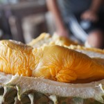 durian fruit 5 150x150 Snake Fruit   Delicious Taste, Terrifying Nightmare