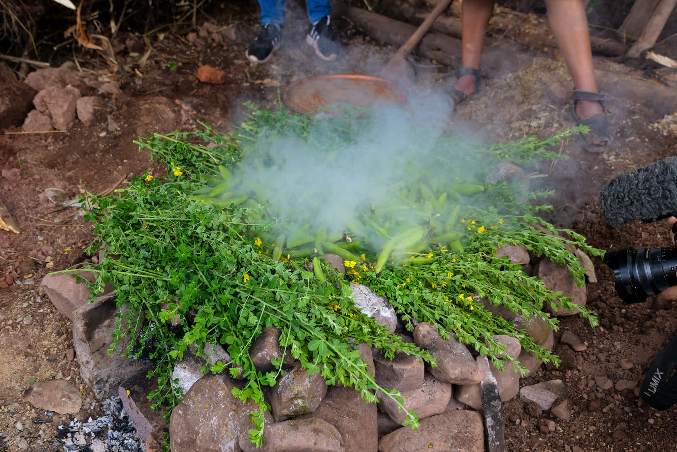 Herbs and Beans are last to sort of seal up the Pachamanca with aromatic flavor