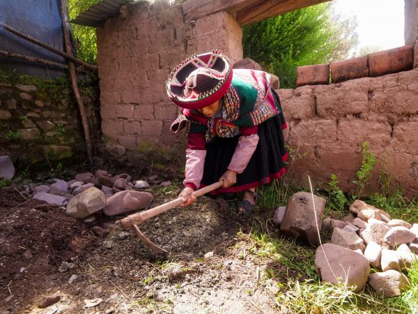 Ancient Earth-Oven Technology in Daily use in Peru - Pacha Manca Pachamanca